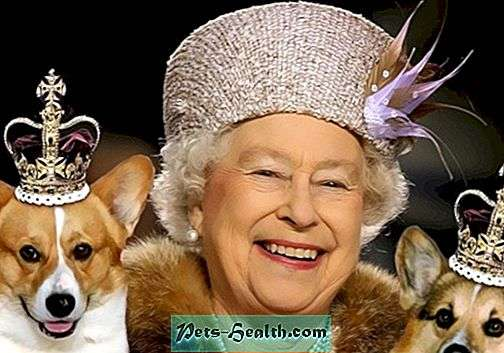 What kind of dog is the English Queen? - Dog breeds - 2019