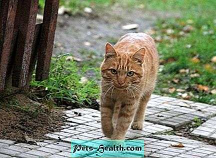 Is it worth to castrate a country cat - Care and education